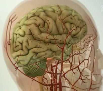 Травы снимающие спазмы сосудов головного мозга